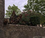 blog-voyage-provence-france-322
