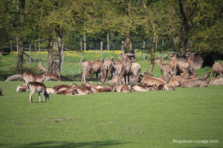 blog-voyage-parc-animalier-sainte-croix-06