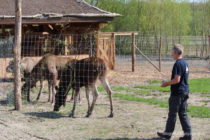 blog-voyage-parc-animalier-sainte-croix-141