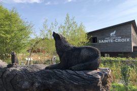 blog-voyage-parc-animalier-sainte-croix-179