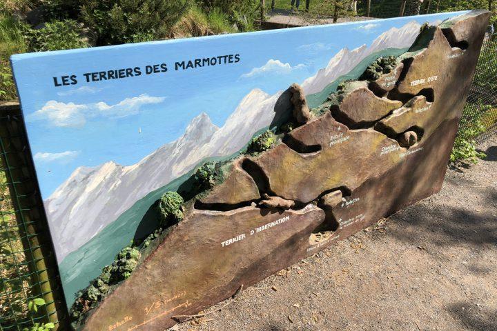 blog-voyage-parc-animalier-sainte-croix-208