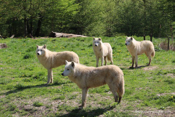 blog-voyage-parc-animalier-sainte-croix-21