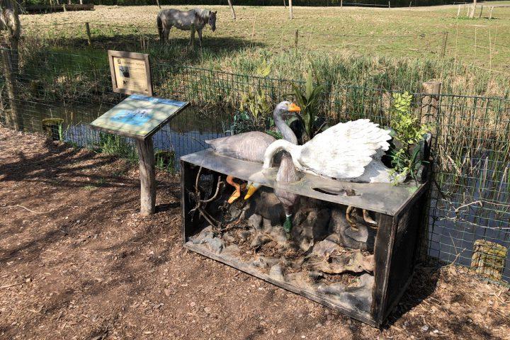 blog-voyage-parc-animalier-sainte-croix-221