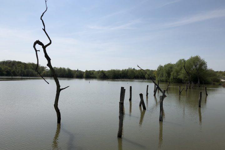blog-voyage-parc-animalier-sainte-croix-297