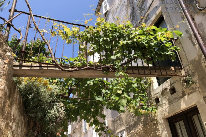 blog-voyage-croatie-dubrovnik-113