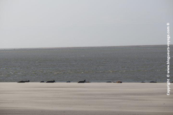 phoques-cayeux-sur-mer-08
